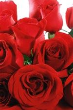 Uma rosa vermelha florescendo florescendo