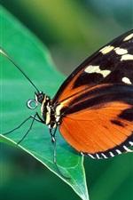 녹색 잎에 붉은 색과 검은 나비