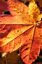 Preview iPhone wallpaper A red leaves in autumn