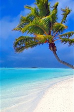 Preview iPhone wallpaper Beach by a coconut tree