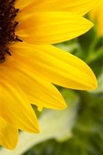 Preview iPhone wallpaper Beautiful Sunflower