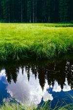 푸른 잔디로 둘러싸인 지우기 물