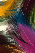 Preview iPhone wallpaper Colorful feathers
