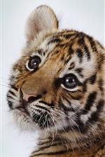 Bonito pequeno tigre