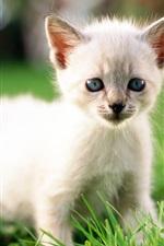 Bonito pequeno gato branco