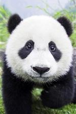 Preview iPhone wallpaper Cute panda