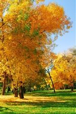 Preview iPhone wallpaper Golden autumn