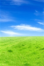Preview iPhone wallpaper Green grass blue sky