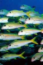 물고기의 그룹 언더워터 월드