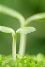 Preview iPhone wallpaper Just the seed germination of two