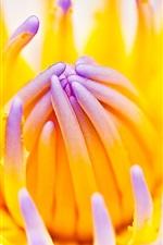 미리보기 iPhone 배경 화면 Lotus 매크로