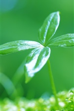 Preview iPhone wallpaper Newly sprouting green leaves