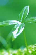 새로 녹색 잎이 돋아