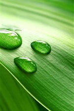 Preview iPhone wallpaper Piece of fresh green leaves with water drops