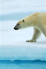 Preview iPhone wallpaper Polar bears walking on ice