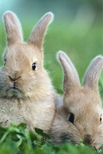 Preview iPhone wallpaper Rabbit on the grass
