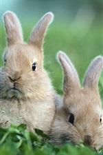 풀밭에 토끼