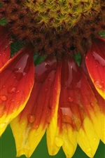Preview iPhone wallpaper Sunflower flower macro close up