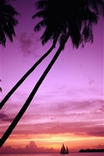 Preview iPhone wallpaper Sunset palm tree silhouette