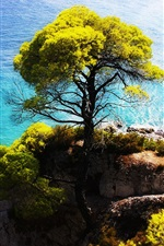 Preview iPhone wallpaper The blue sea side stands a tree on the cliff