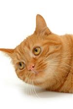 미리보기 iPhone 배경 화면 문신 고양이와 물고기에 대한 유방