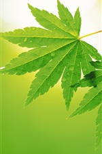 Preview iPhone wallpaper Two green Maple Leaf