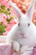 화이트 토끼, 꽃