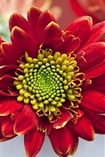 아름다운 붉은 꽃