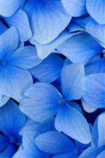 iPhone обои Синие цветы