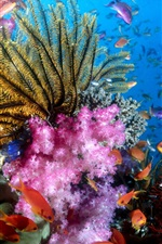 Preview iPhone wallpaper Colorful sea fish
