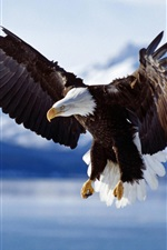 Preview iPhone wallpaper Flying eagle on the lake