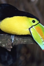 Preview iPhone wallpaper Green parrot mouth