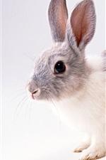 Preview iPhone wallpaper Grey Rabbit