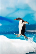 Preview iPhone wallpaper Happy Antarctic penguins on ice