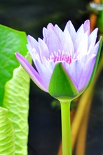 Lotus just opened