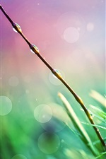Preview iPhone wallpaper Morning dew