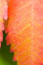 Red folha close-up