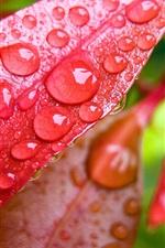 iPhone обои Красные листья с каплями воды