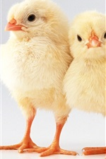 Preview iPhone wallpaper Two lovely chicks