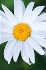 Preview iPhone wallpaper White flowers