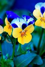 노란색과 파란색 꽃
