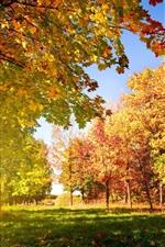 가을 나무와 잎