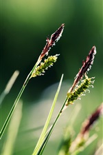 Preview iPhone wallpaper Close-up of grass