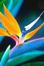 꽃 매크로