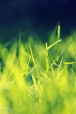 Preview iPhone wallpaper Green grass macro