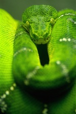 Preview iPhone wallpaper Green snake