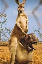 Hippo no bolso canguru