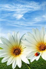 Preview iPhone wallpaper Ladybug daisy sky