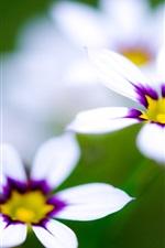 매크로 흰색 꽃