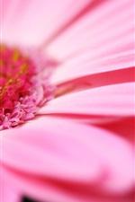 Preview iPhone wallpaper Pink flower macro